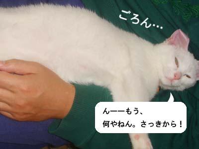 cat128