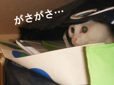 cat133