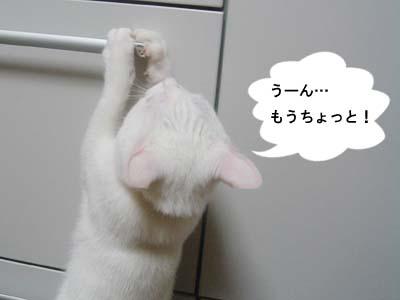 cat136