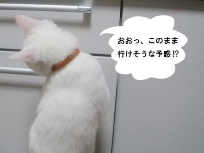 cat137