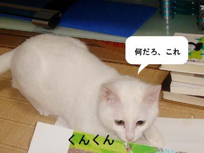 cat138