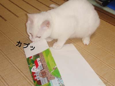 cat139