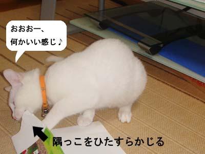 cat140