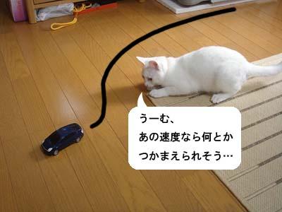 cat145