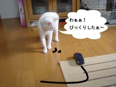 cat146