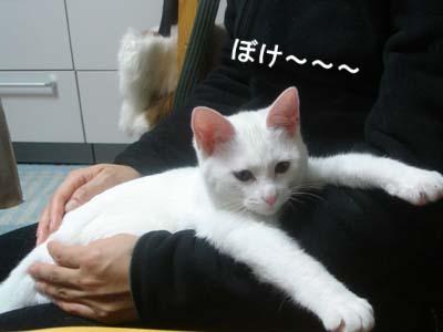 cat151