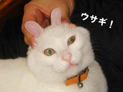 cat153
