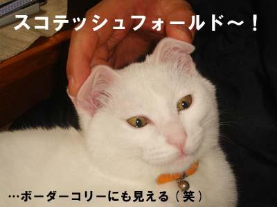 cat155
