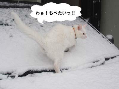 cat165