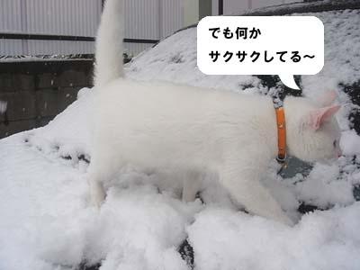cat166
