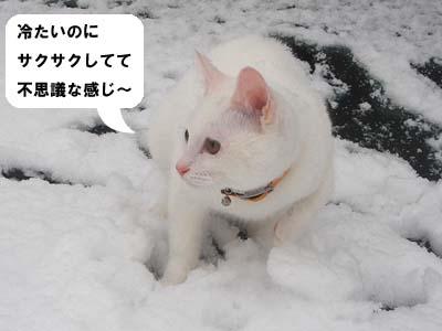 cat167