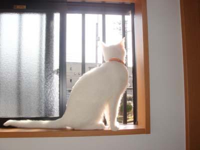 cat168