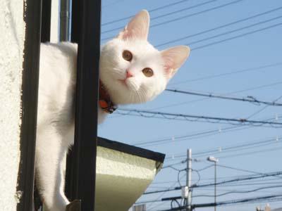cat170