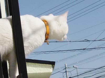 cat171