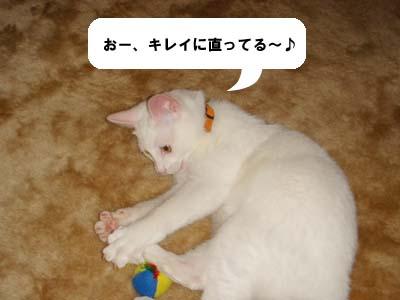 cat174