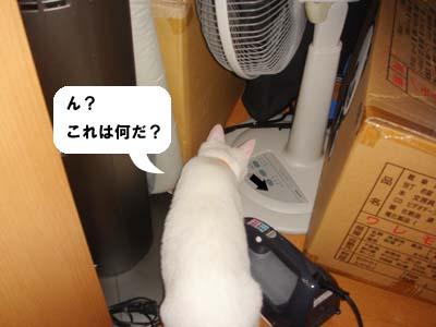 cat177