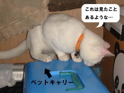 cat178