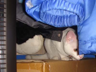 cat179