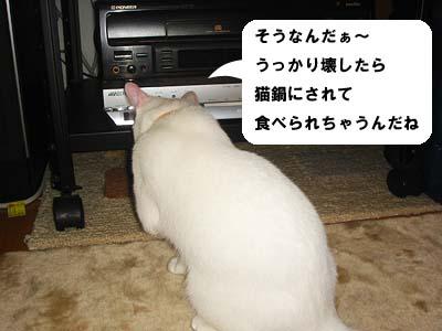 cat182
