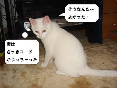 cat183