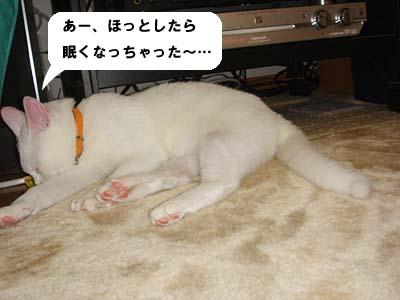 cat184
