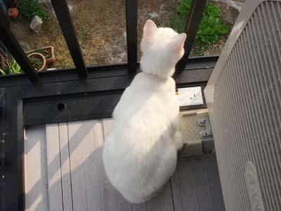 cat185