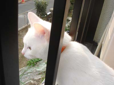 cat186