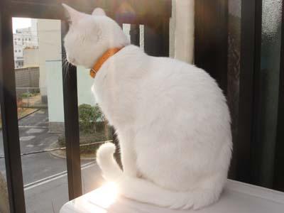 cat187