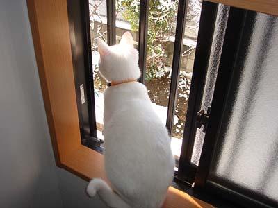 cat188