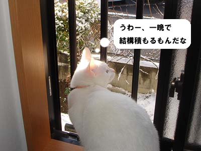 cat189