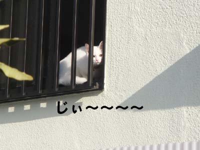 cat190