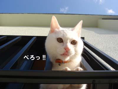 cat191