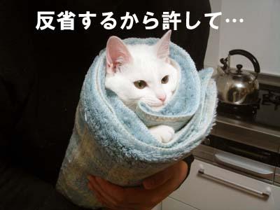 cat195