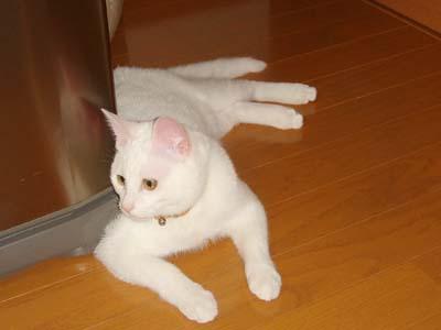 cat196