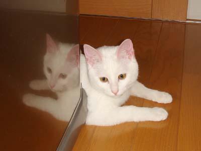 cat197