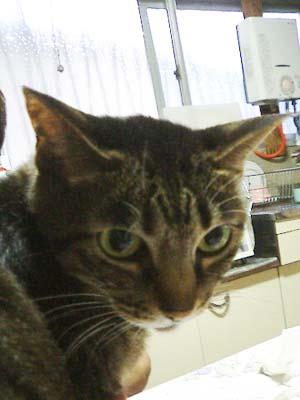 cat198