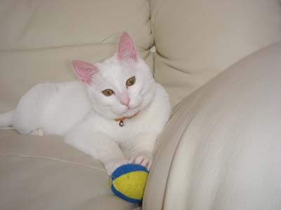 cat201