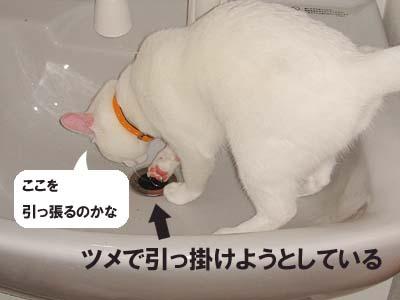 cat207