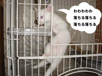 cat40