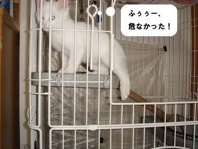 cat41