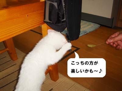 cat43