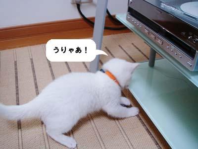 cat46