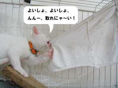 cat49