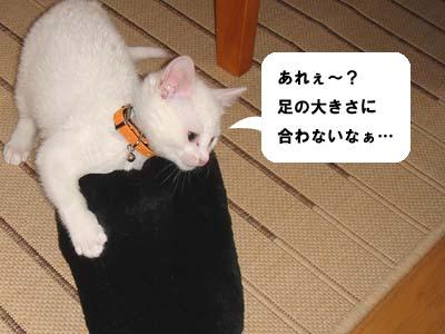 cat748
