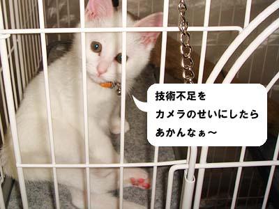 cat57