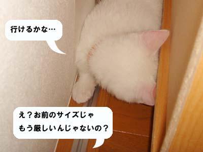 cat61