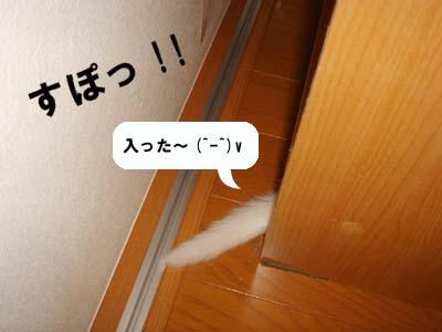 cat63