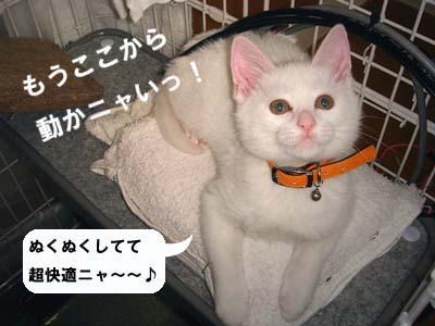 cat64