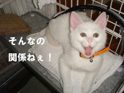 cat67