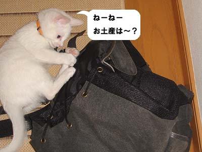 cat74